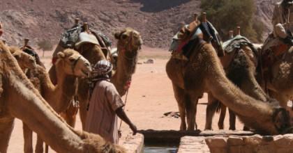 Drunk On Wadi Rum