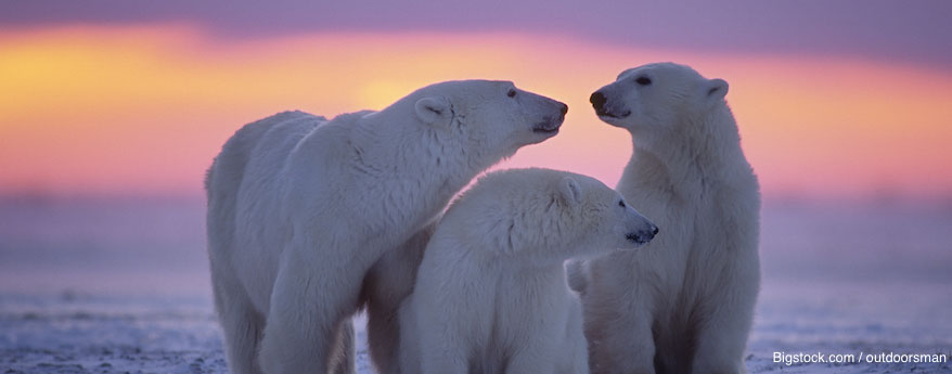 From rugged, glacier-topped mountains to polar bears, small villages and breathtaking scenery, Peregrine's polar experts are ready and waiting to help you discover the Arctic.